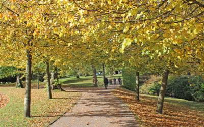 New Buxton to Goyt walk